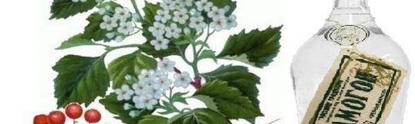 Настойка на свежих цветах боярышника