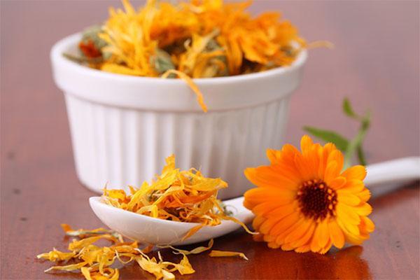 свежая и сухая календула для приготовления настойки или чая
