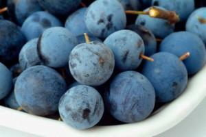 плоды терна