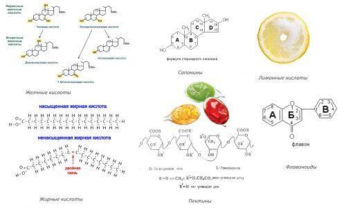 Биоактивные вещества маклюры
