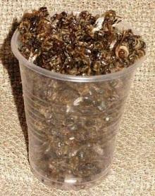 При помощи спиртовой настойки на подморе пчел можно избавится от множества болезней