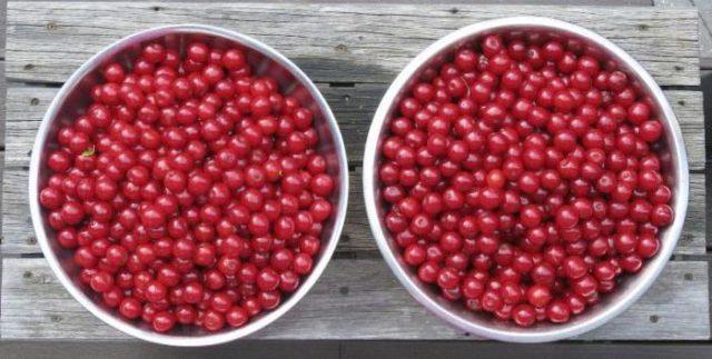 две миски полные вишни