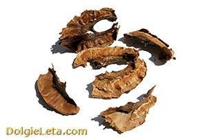 Перегородки (перепонки) грецких орехов.