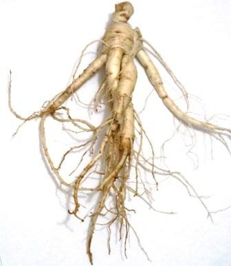 Женьшеня корень