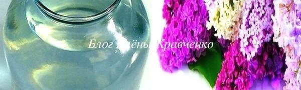 Настойка из цветов сирени на водке