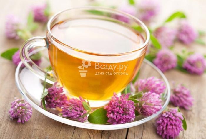 Чай из клевера оказывает общеукрепляющий эффект на организм