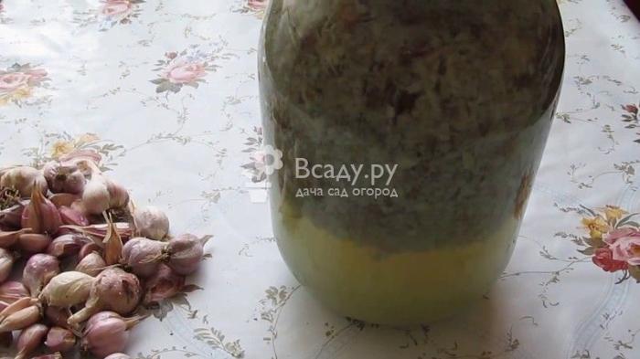 Настой чеснока применяют для защиты от сосущих насекомых