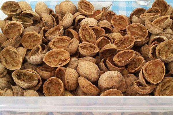ореховая зола - природный абсорбент