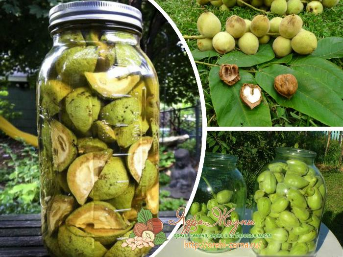 Как приготовить настойку из маньчжурских орехов на спирту (водке) в домашних условиях