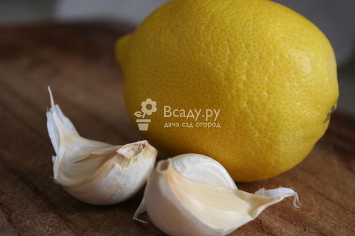 Чеснок с лимоном: полезные свойства чеснока