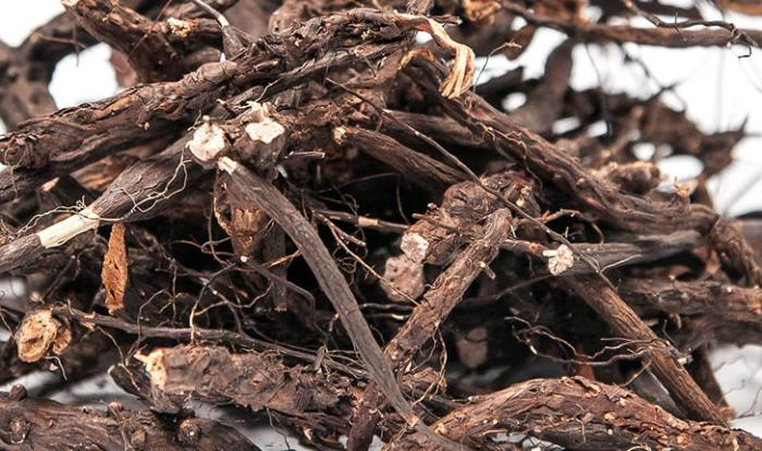 Сбор и заготовка корня калгана