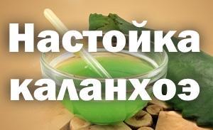 Настойка Каланхоэ