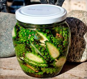лечебная настойка из зеленых шишек сосны