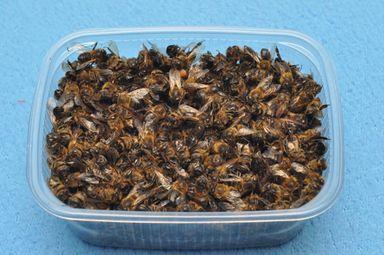 Пчелиный подмор лечение простатита