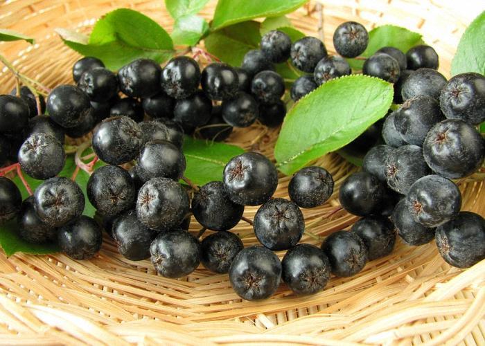 Спелые ягоды черноплодной рябины