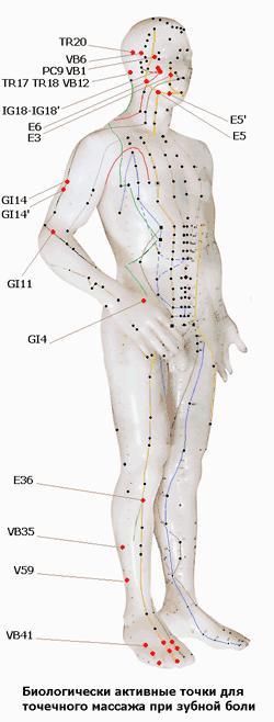 Топография биологически активных точек (БАТ) для точечного массажа при зубной боли