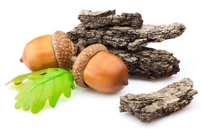 Лечебные свойства и применение коры дуба
