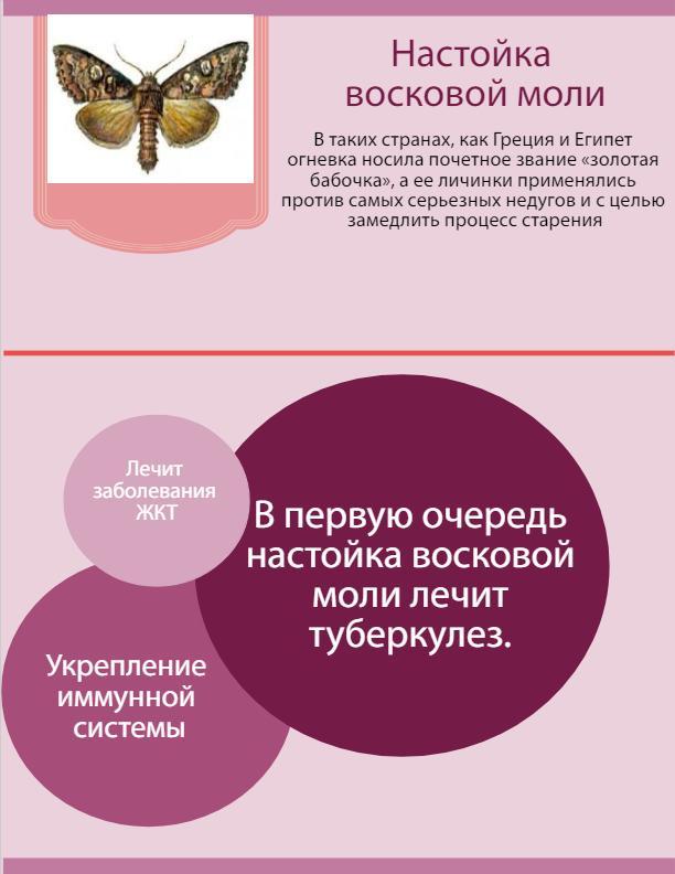 фото восковая моль инфографика
