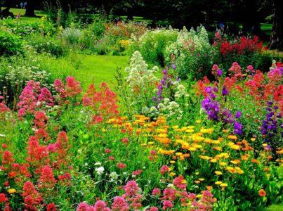 Цветочные растения можно опрыскивать настоем табака от вредителей