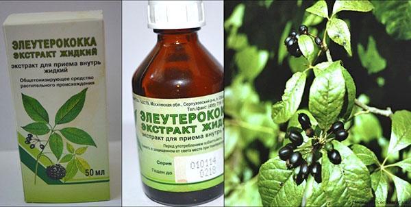 Жидкий экстракт элеутерококка улучшает работу иммунной системы