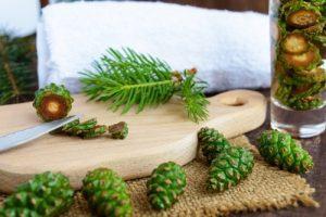Использование зеленых молодых шишек