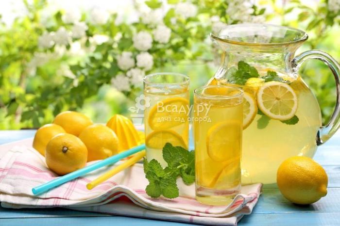 Чеснок с лимоном: полезные свойства настойки и рецепты