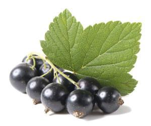 Листья-и-плоды-черной-смородины