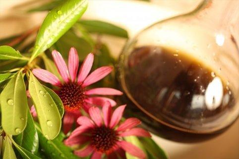 как пить настойку эхинацеи для поднятия иммунитета