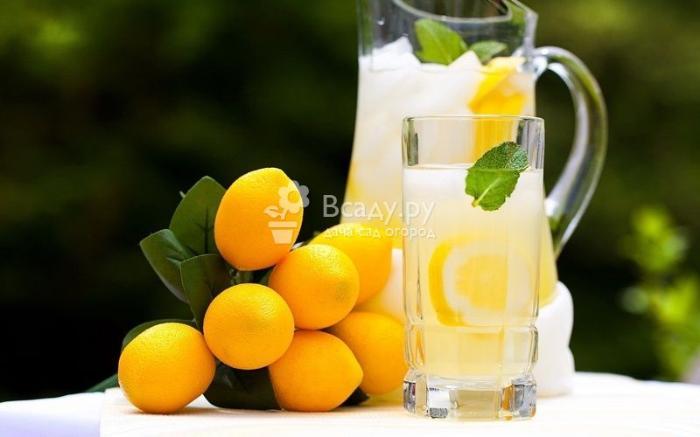 Чеснок с лимоном:способ приготовления