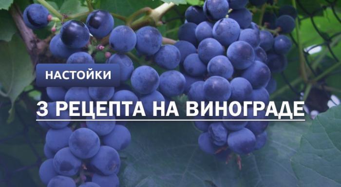 Настойка из винограда: 3 рецепта в домашних условиях