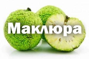 Маклюра - настойка для суставов