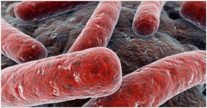 Применение церазы дает возможность преобразовывать соединительную ткань в мышечно-сократимую