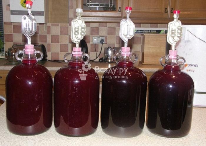Вкусное домашнее вино из варенья под гидрозатвором