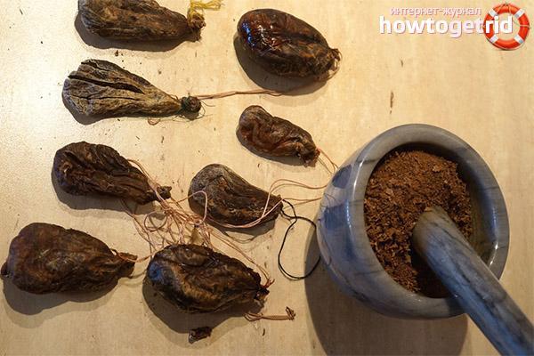 При каких заболеваниях используется бобровая струя