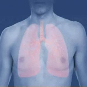 Asthma_attack-airway_(bronchiole)_constriction-animated