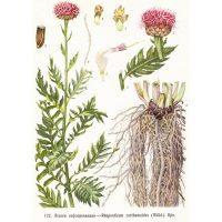 Страничка с изображением волшебной травы