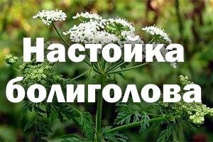 Настойка Болиголова