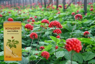 Состав и полезные свойства растения